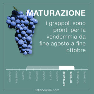 Maturazione IT