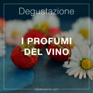 Profumi del vino IT