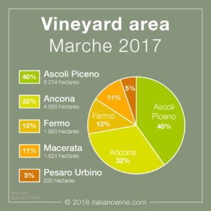 Superficie vitata Marche EN vineyard area